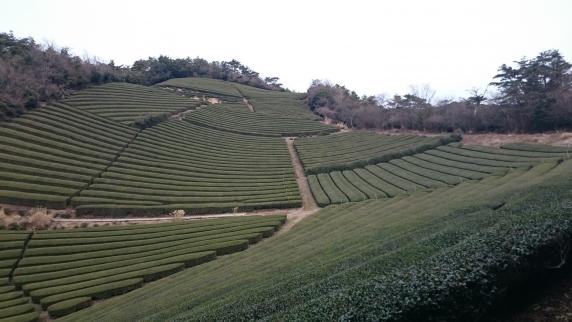 2016/1/17 鷲峰山