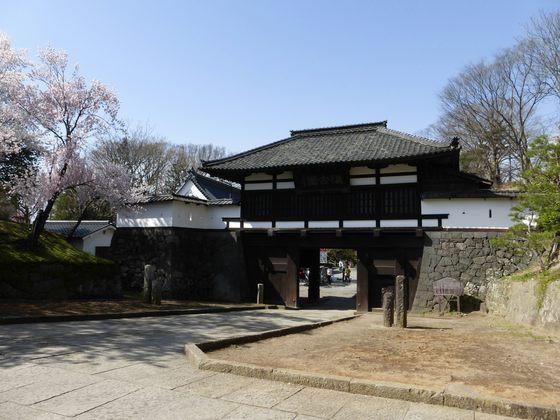 重要文化財小諸城三の門と桜