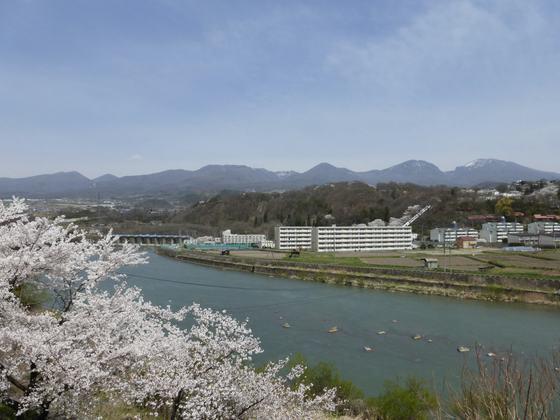 千曲川と満開の桜のコラボレーション