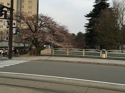 松川桜並木2016330
