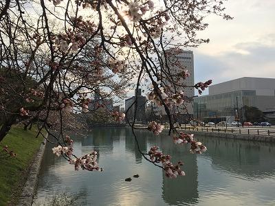城址公園桜20160330