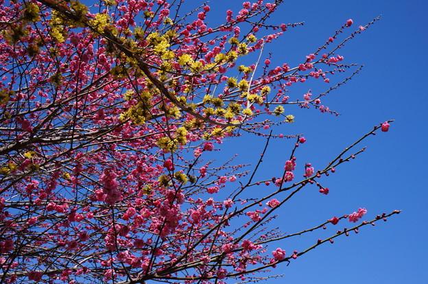 黄色とピンクと青のコントラスト