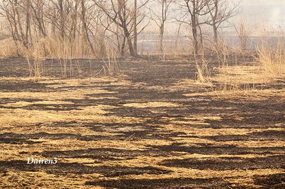 2007年の葦焼き