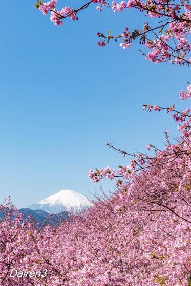 脚立から撮った富士山