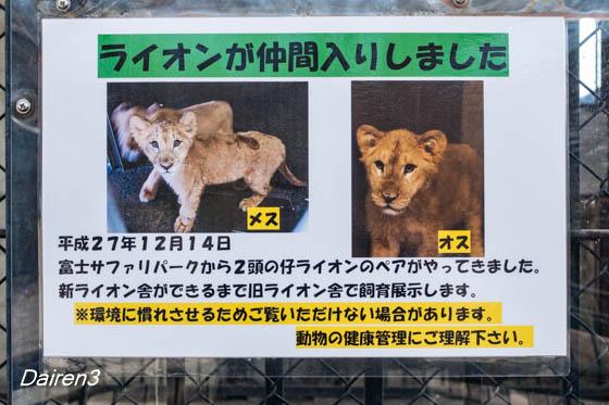 桐生が岡動物園にライオンが来た