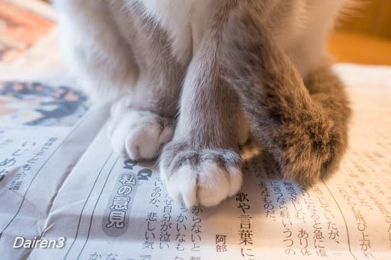 新聞が読めない