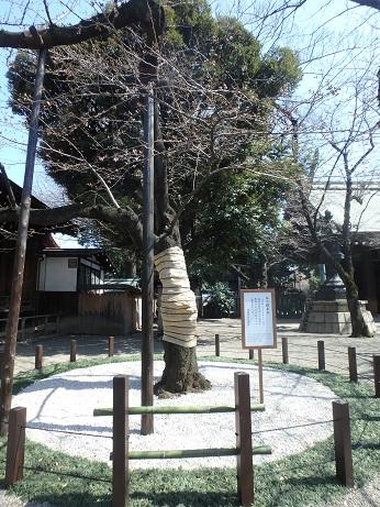 標本木 2