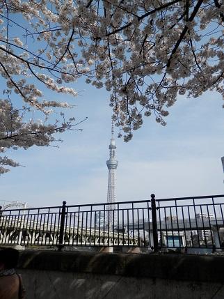 東京スカイツリー 桜