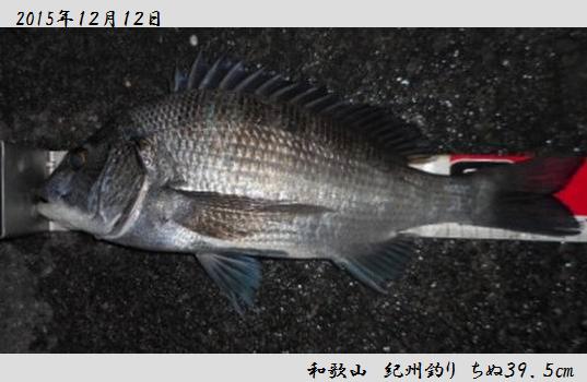 20151212wakayama395.jpg