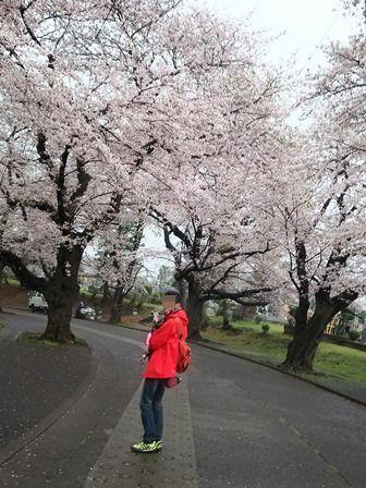 0403花見散歩_06