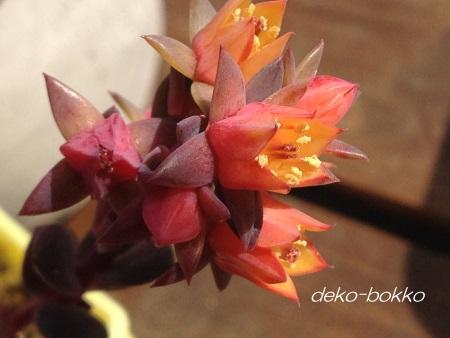 クロマ 花 201602