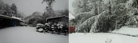 16-1-17 朝雪倒れ竹