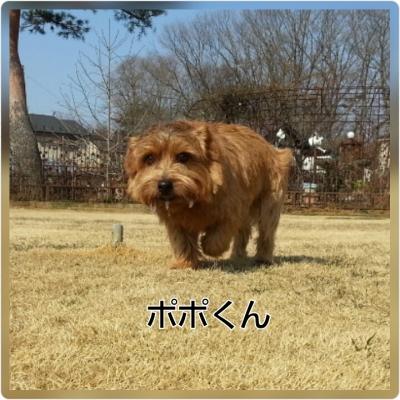 20160227173346eda.jpg