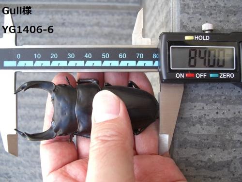 CIMG7565加工済み
