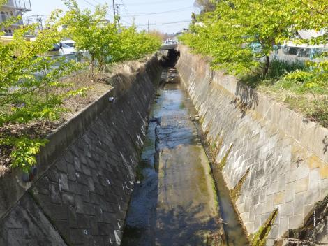向橋より平瀬川上流を望む