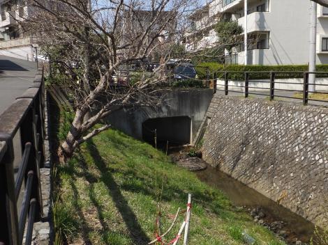 平瀬川最上流部・宮前区菅生4