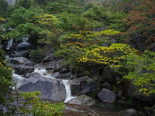 屋久島ー二俣川ー2