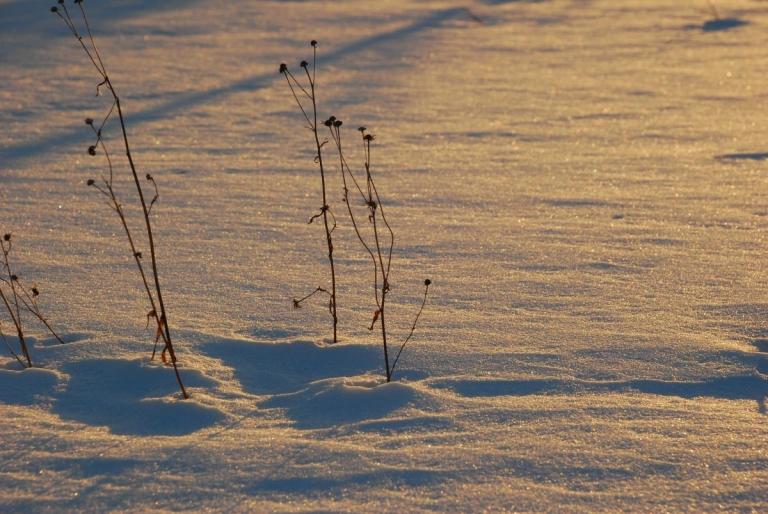 雪中散歩~