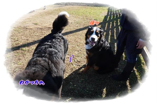 2016-1ココアちゃん4