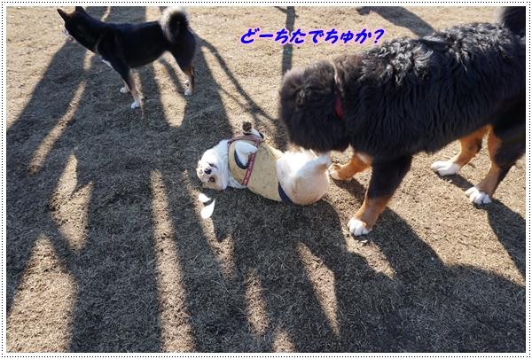2016-1コギちゃんと