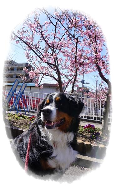 2016-2桜とエルフ1