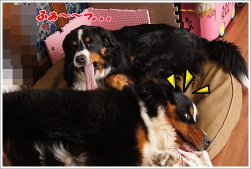 の2016-3エルフ災難1