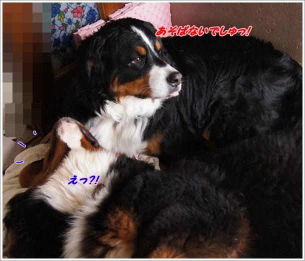2016-3エルフねぇたん4
