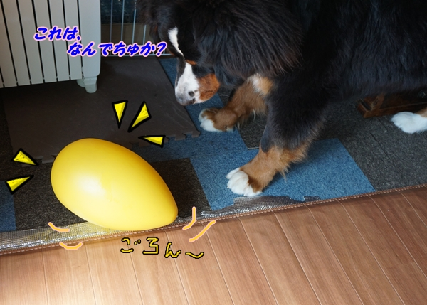 2016-3きいろいたまごちゃん2