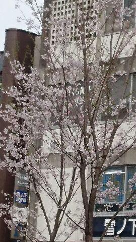 はなみ2 (270x480)