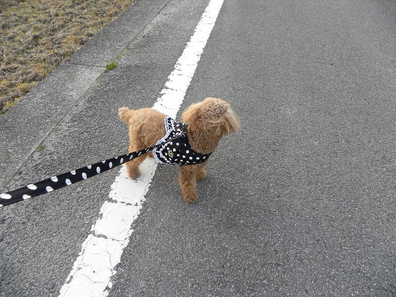 散歩中のそら1