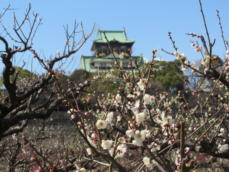 大阪城と梅3