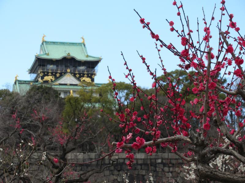 大阪城と梅2
