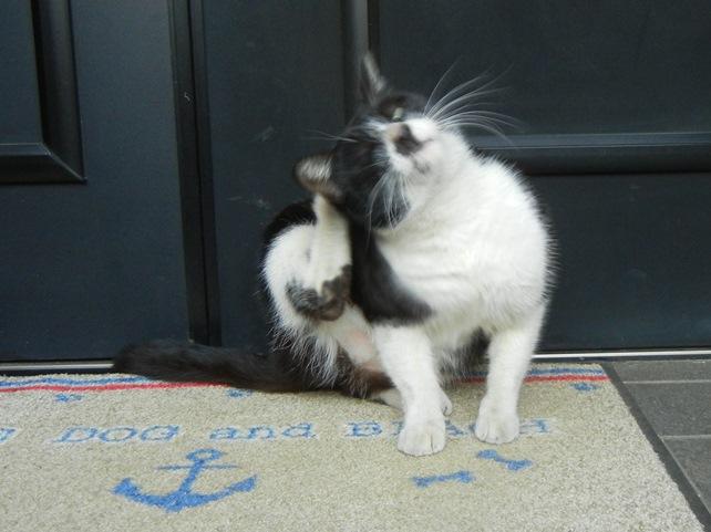 cat160109.jpg
