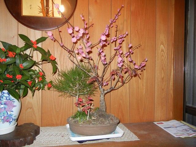 shochikubai160124.jpg