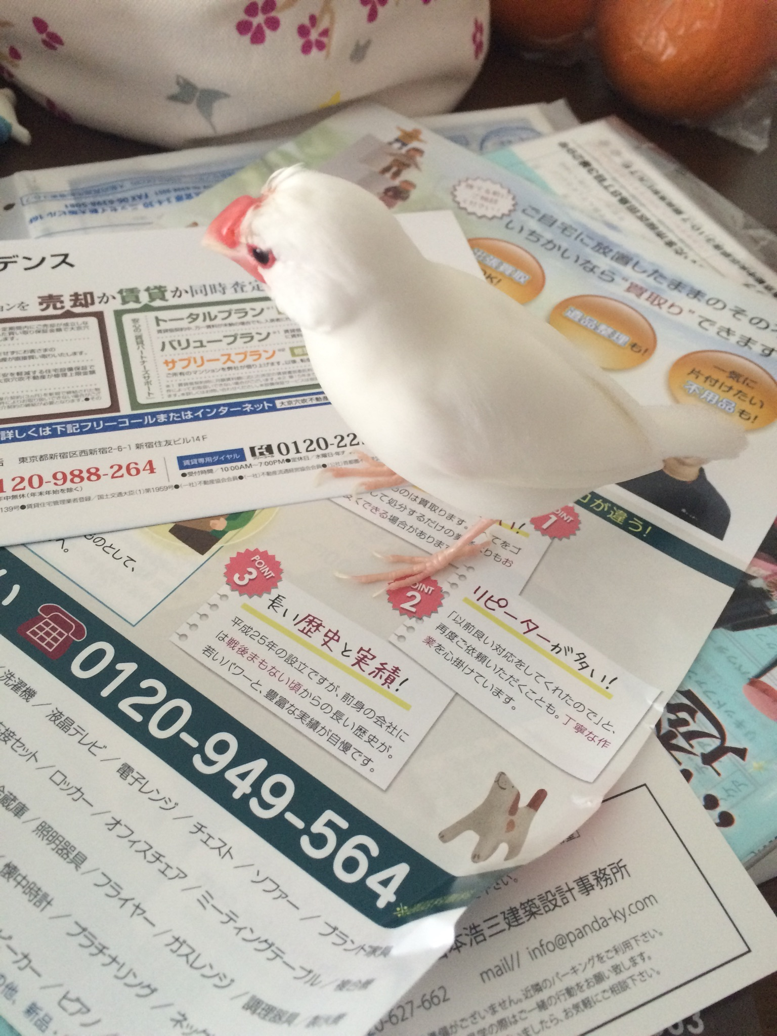 ijiiji2.jpg