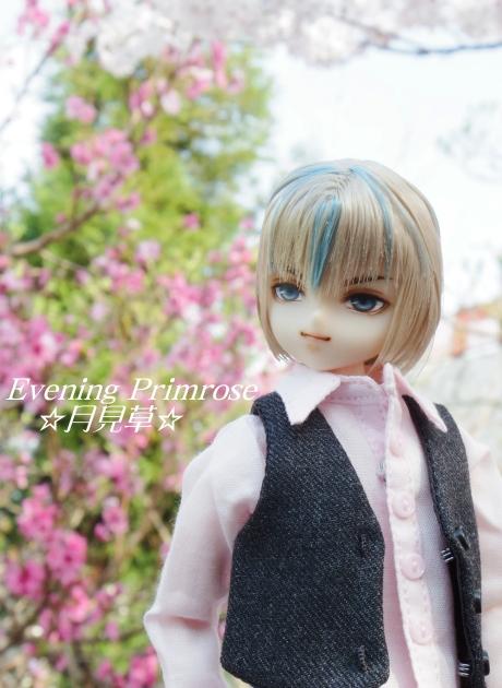 お花見03