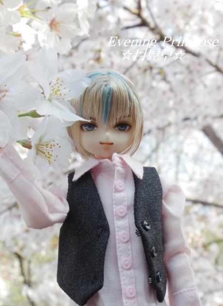 お花見01