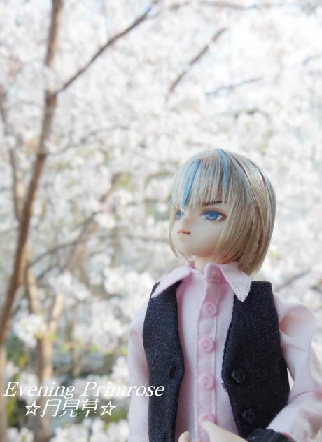 お花見07