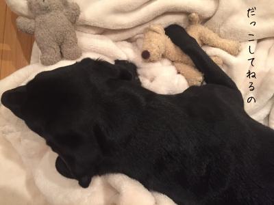 ぬいぐるみを抱く犬