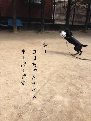 サッカーする犬04