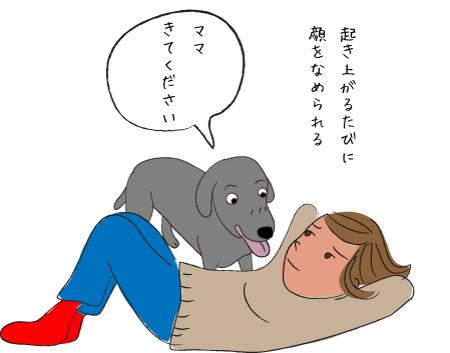 腹筋を邪魔する犬