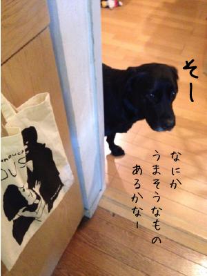 のぞく犬01