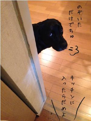 のぞく犬02