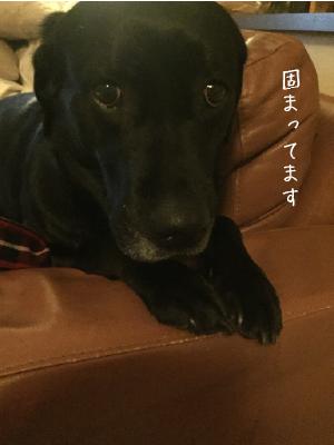 カミナリが怖い犬02