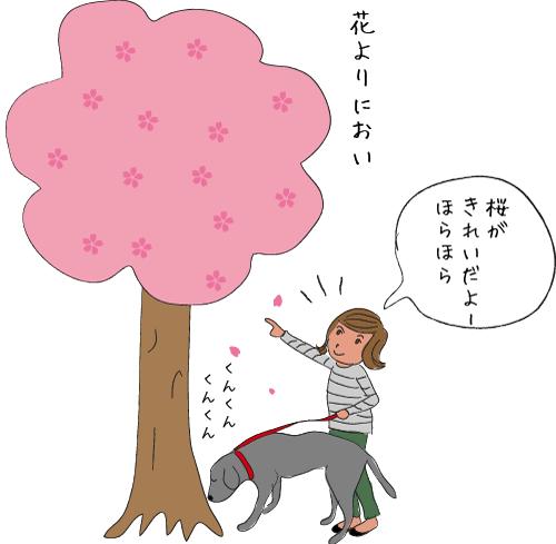 桜とラブラドール
