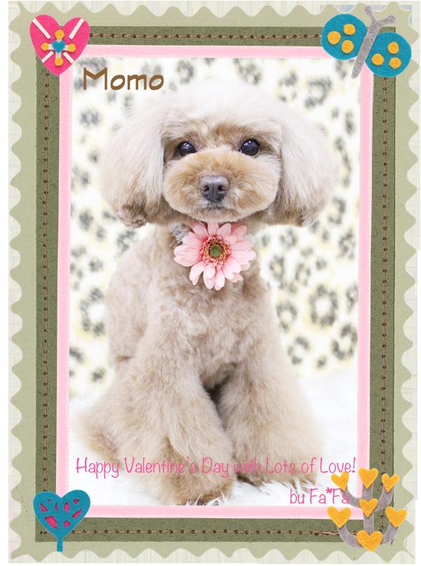 MOMOちゃん2月-1