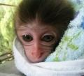 猿の赤ちゃん_02