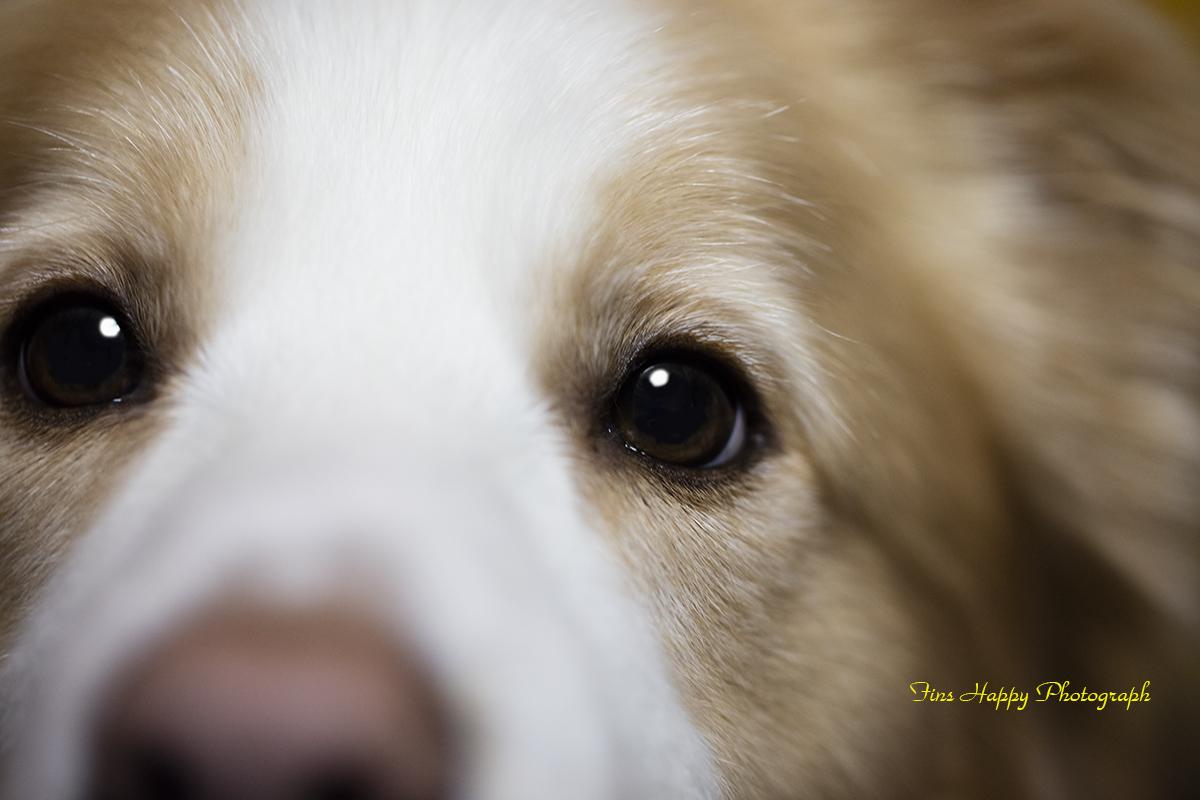 つぶらな瞳
