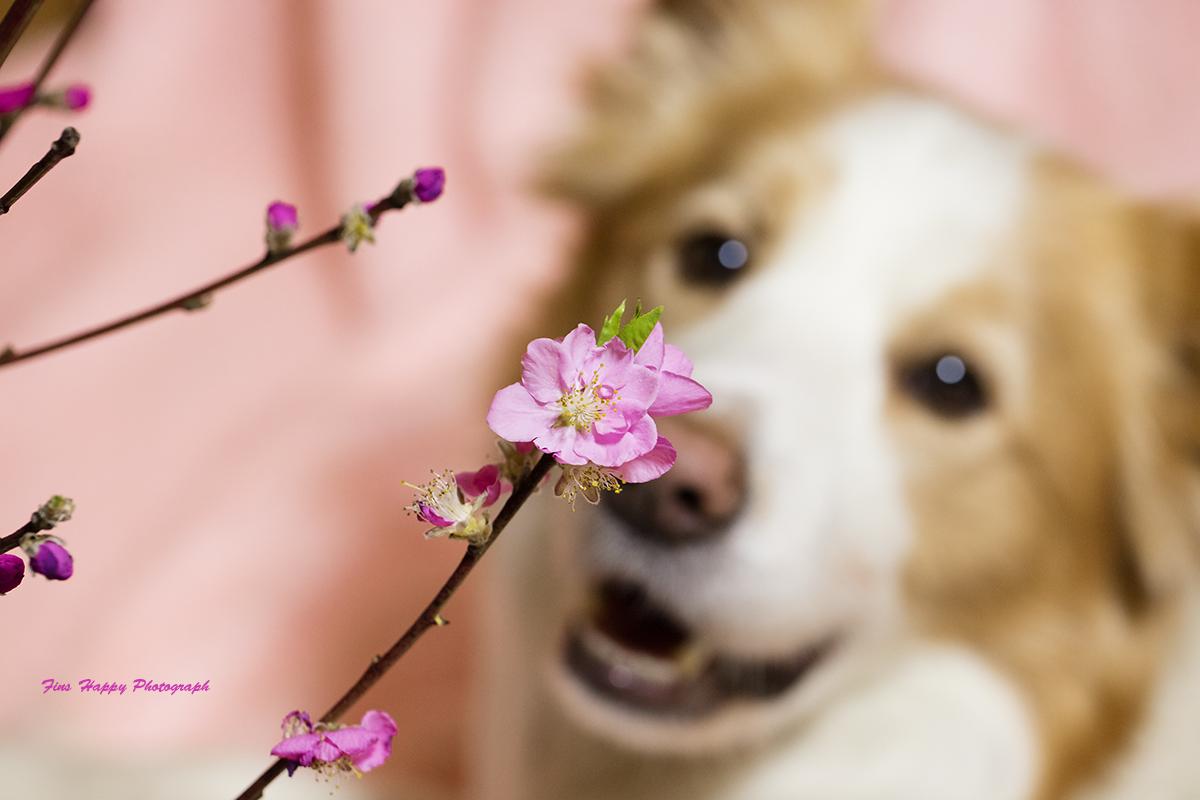 桃は咲いたか桜はまだかいなっ?!