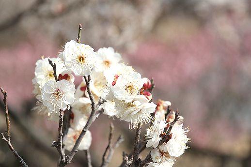 IMG_0185ryokugaku.jpg